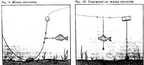 ловля судака донной снастью на живца